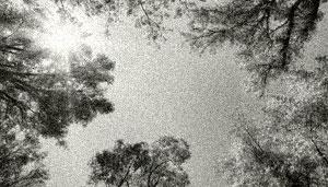 Blick in den Himmel mit Bäumen und klarem Himmel.