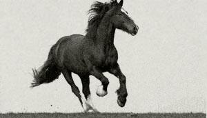 Ein herumtollendes Pferd